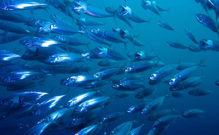 I prodotti ittici, tanto preziosi quanto pericolosi
