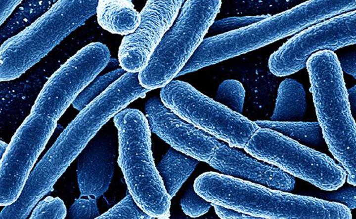 I batteri potrebbero essere utili reclute nella battaglia contro il cancro