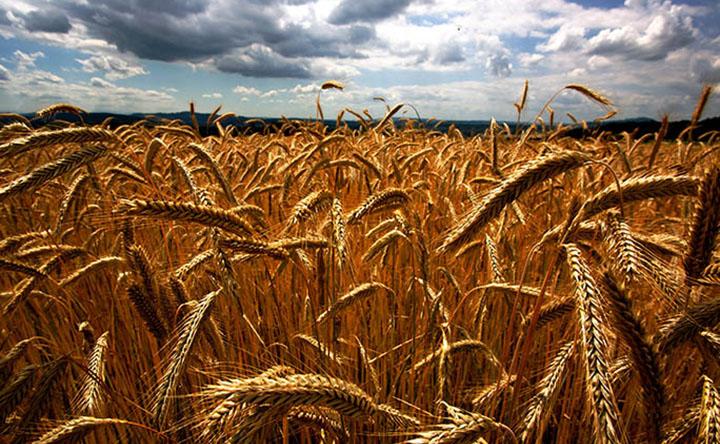 Come il cambiamento climatico metterà a rischio la sicurezza alimentare globale
