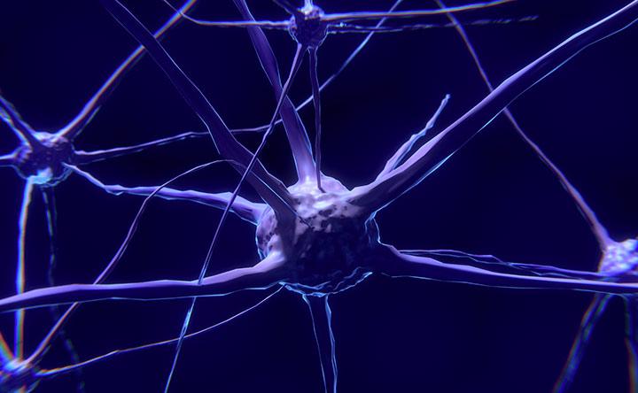 Il cervello è dieci volte più attivo di quello che si è sempre pensato