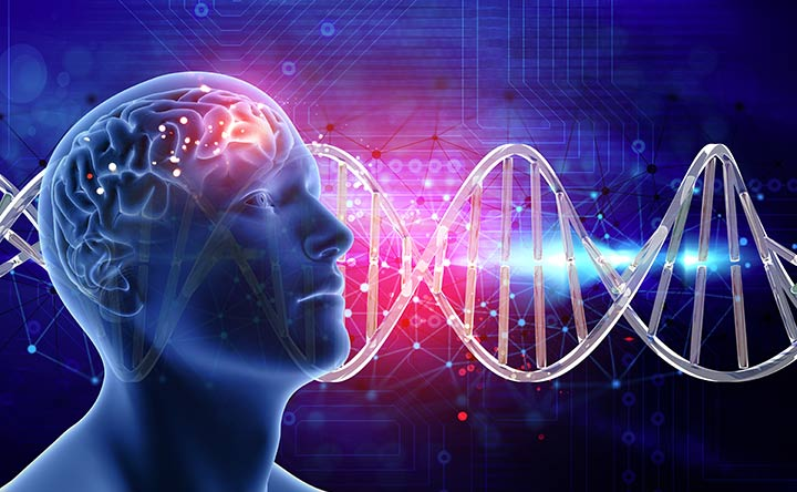 Cervello: scoperto il circuito che risponde agli eventi piacevoli