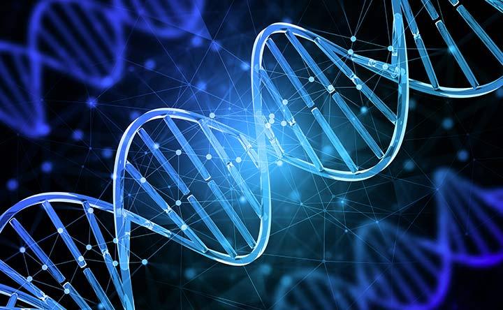 Bruciare i grassi con l'epigenetica