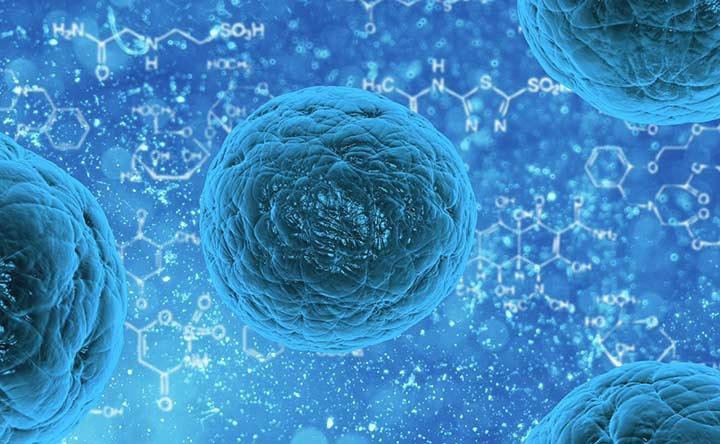 Dalle piante all'uomo: il modello matematico per comprendere il differenziamento delle cellule staminali umane