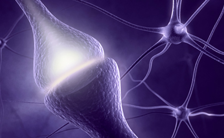 Le sinapsi della salute