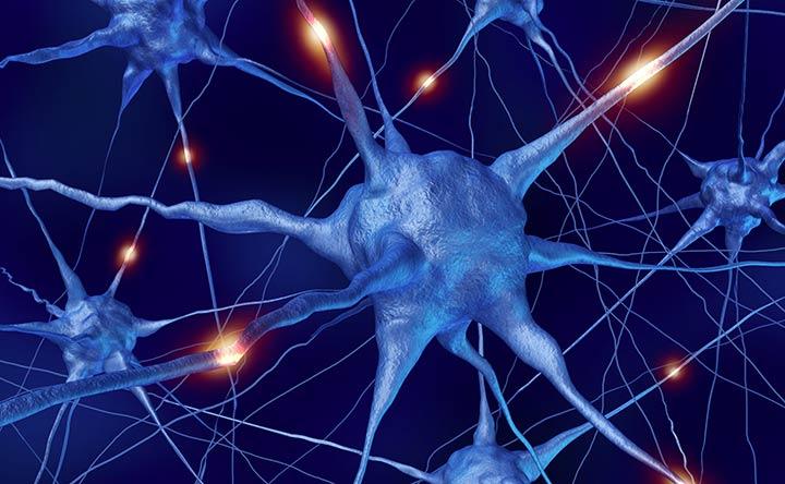 """Sclerosi multipla: le cellule """"riparatrici"""" della mielina che agiscono solo quando l'infiammazione cerebrale lo permette"""