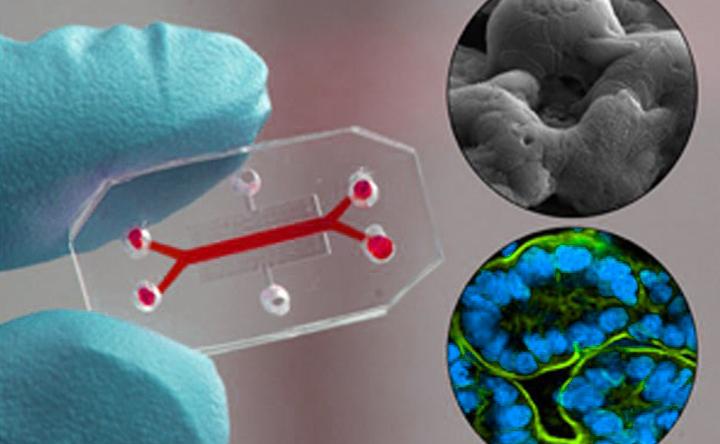 La nuova sfida della biologia: dall'approccio riduzionista alla spinta ricostruzionista
