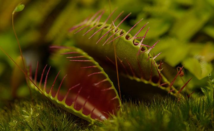 Imparare dalle piante carnivore per sviluppare nuovi materiali