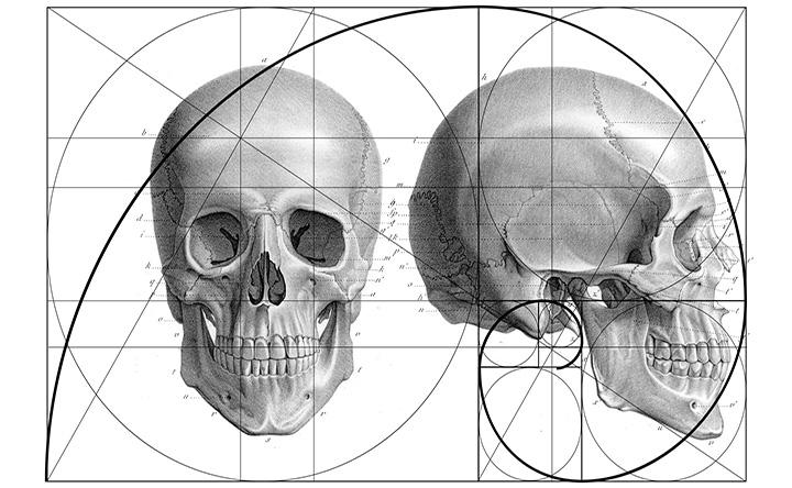 Le proporzioni del cranio umano seguono il rapporto aureo, non è così per gli altri animali