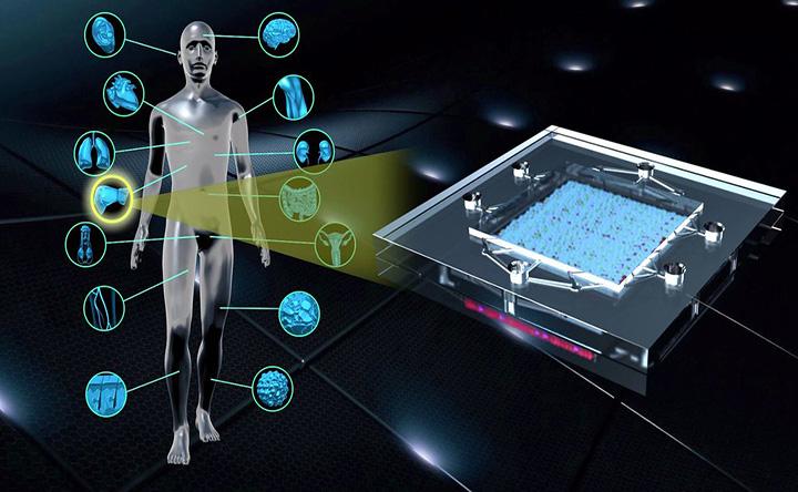 """Presto l'istantanea sullo stato di salute del nostro sistema immunitario grazie ad un """"microchip biologico"""""""